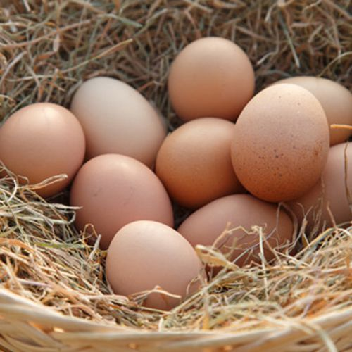 Eggs Tray of 30 Eggs